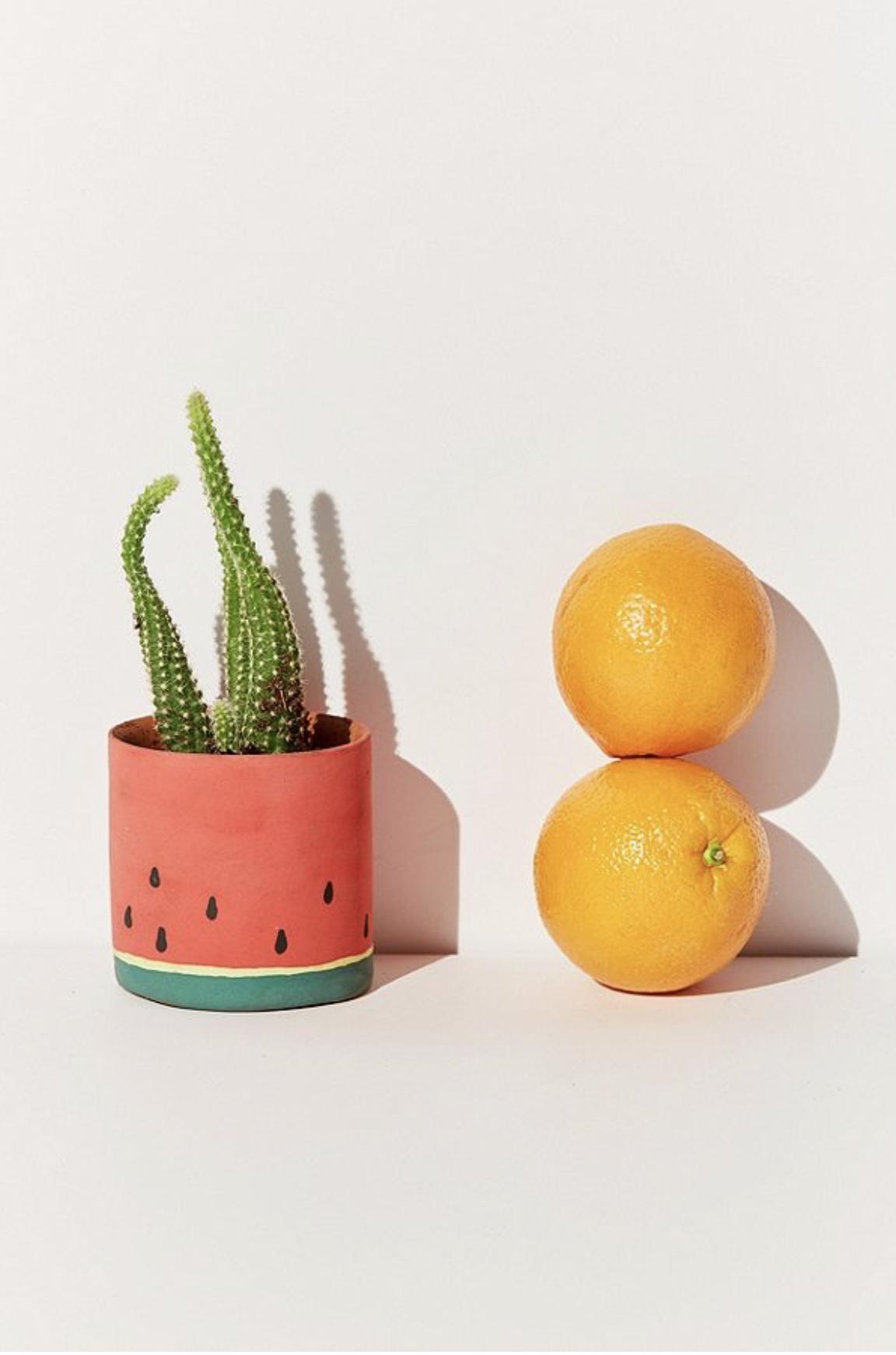 來一點幽默:西瓜盆栽